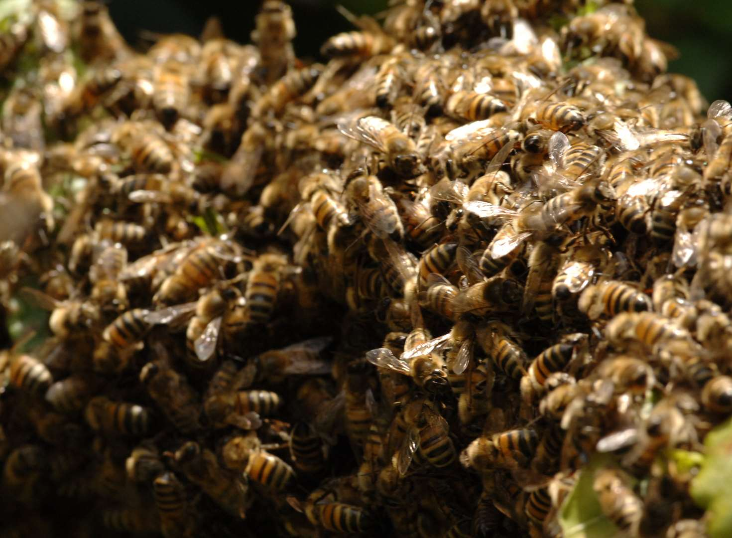 Swarm of bees leaves woman trapped in home