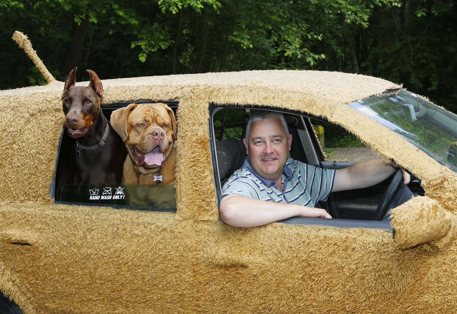 Chauffeur turns car into 'dogmobile'