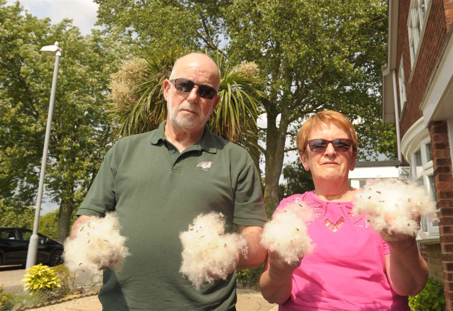 White Poplar plagues couple's home