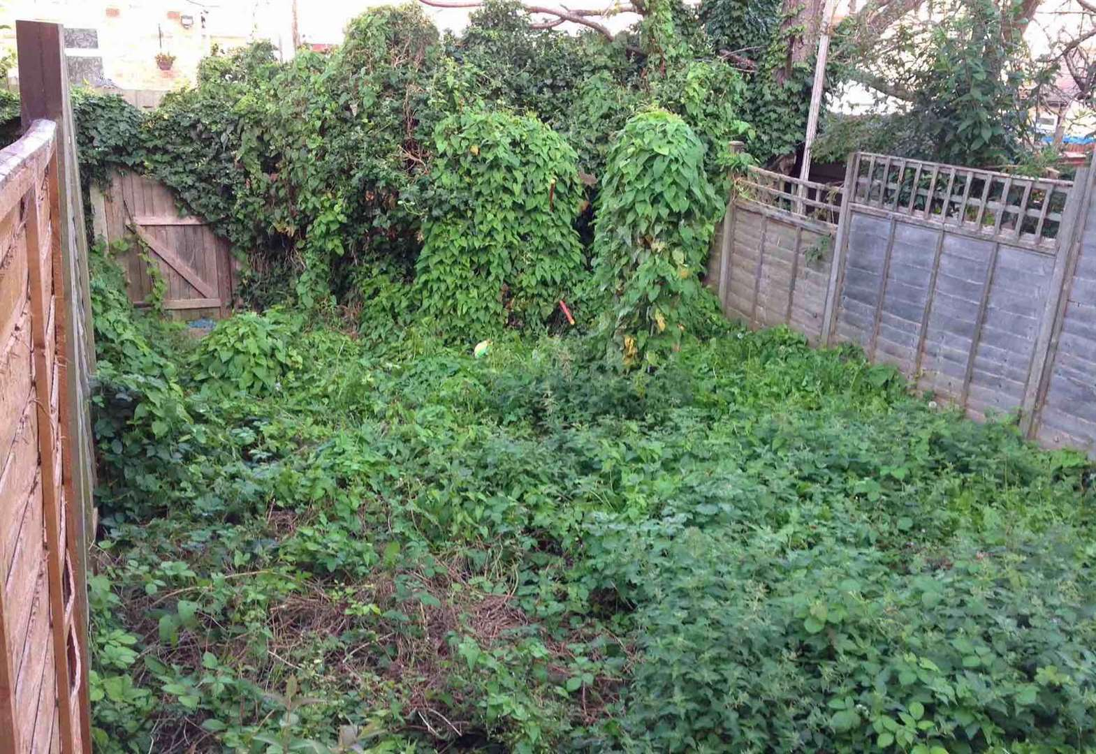 Thousands of pounds fine issued for untidy gardens