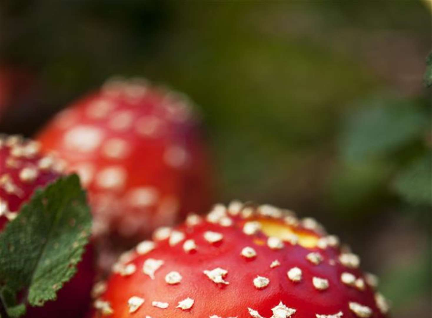Get up close to the autumn funghi