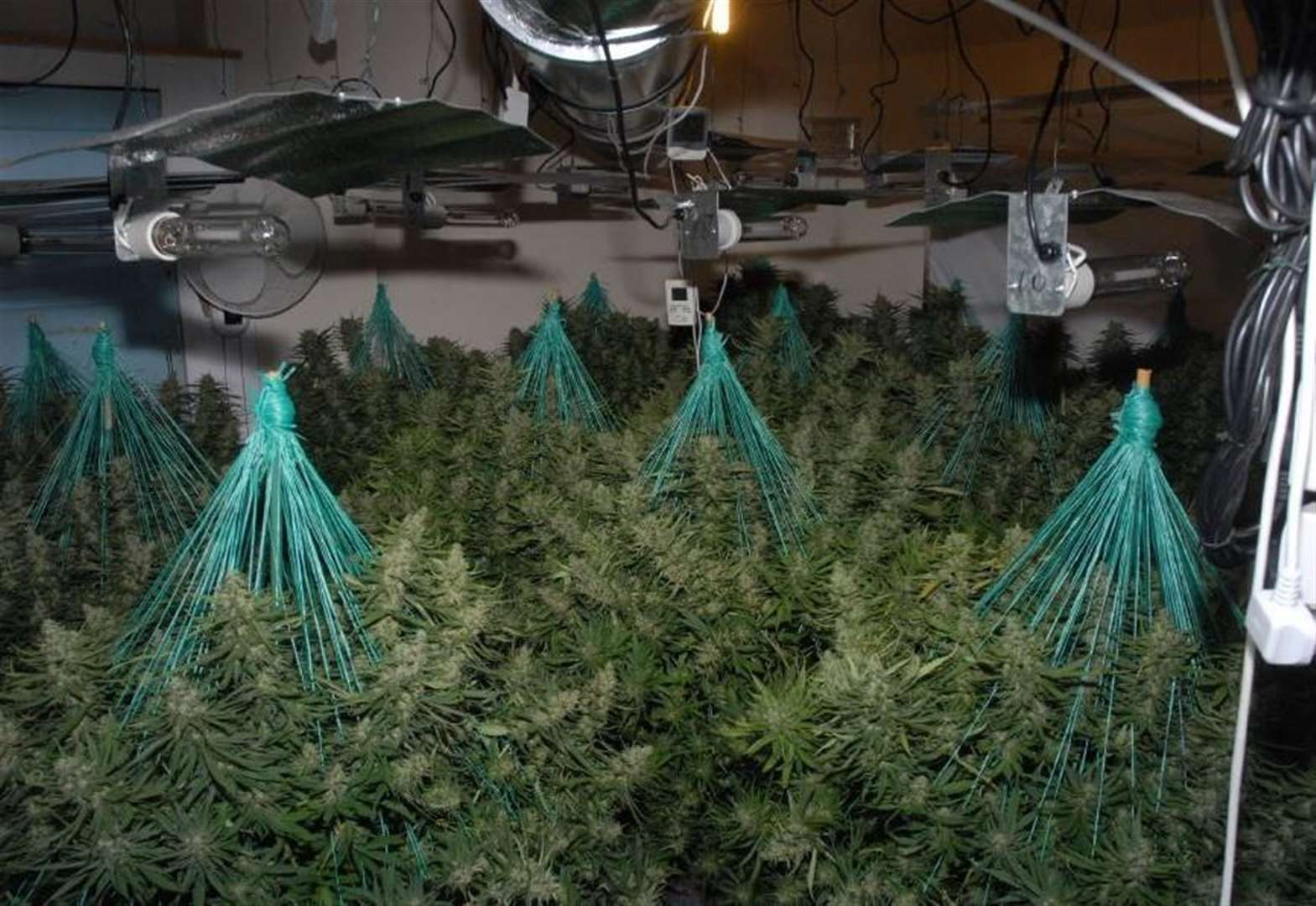 Pair jailed for cannabis factory