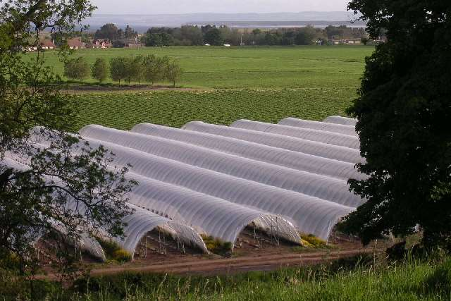 Polytunnels like the ones used on Salmans Farm. Picture: Val Vannet