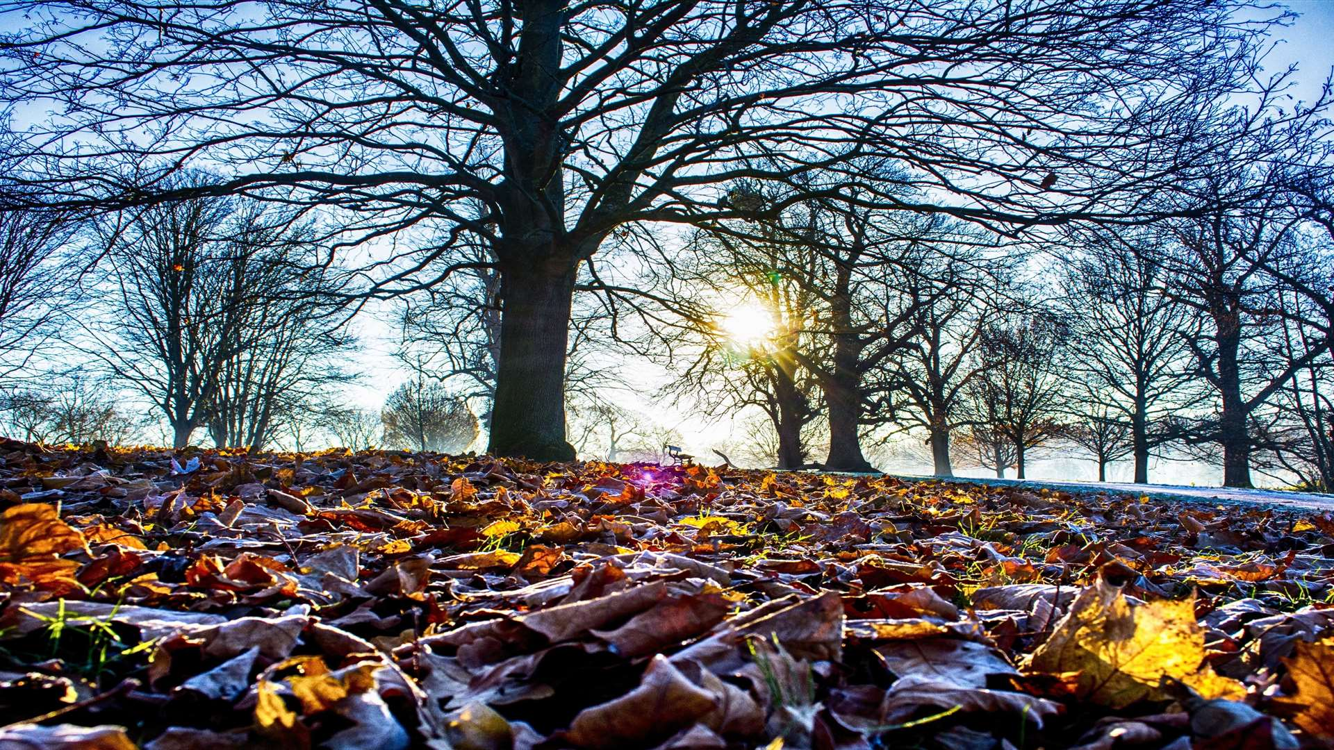 Roger Wilkins' picture won the Seasons category of the Mote Park photographic competition