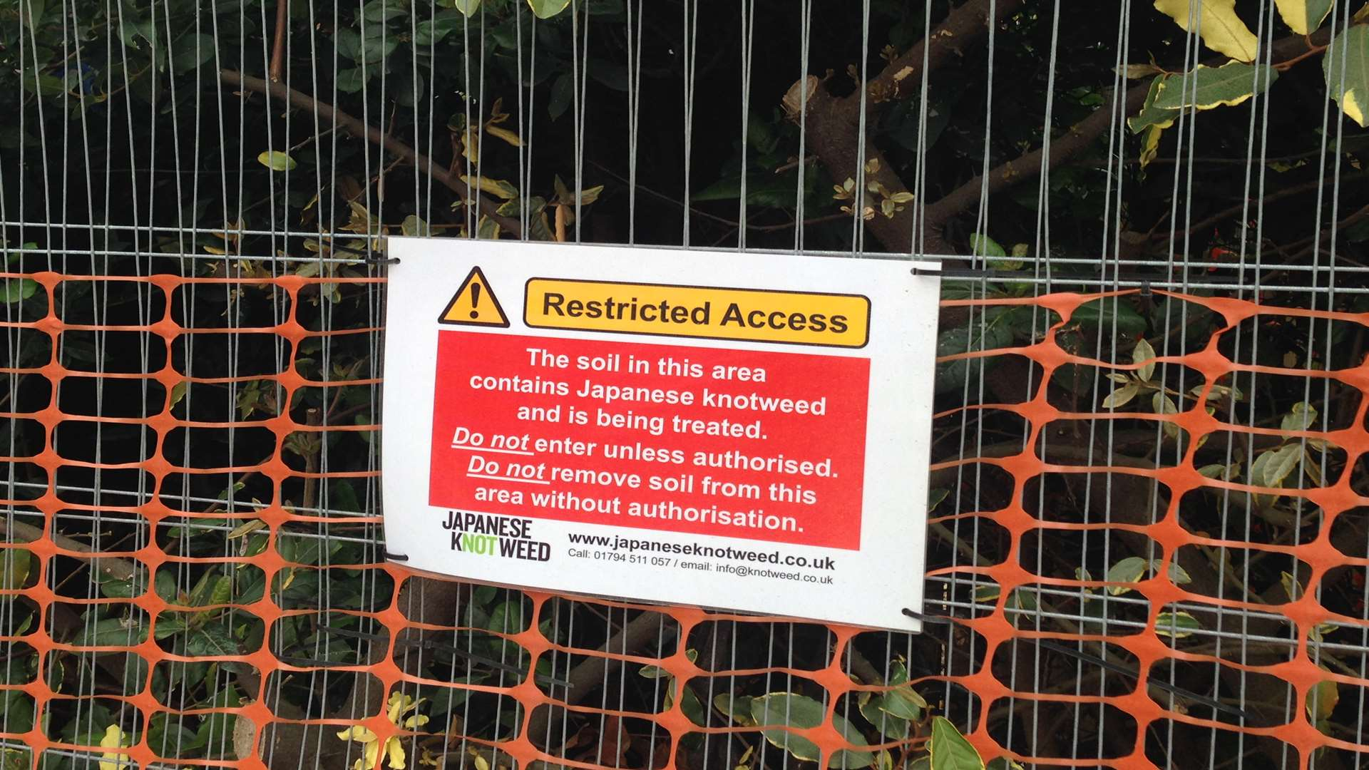 Japanese Knotweed Ltd are tackling the problem