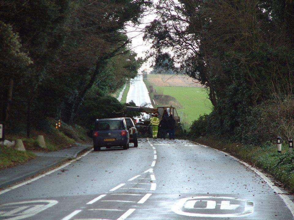 Trees may be blown down during Storm Freya
