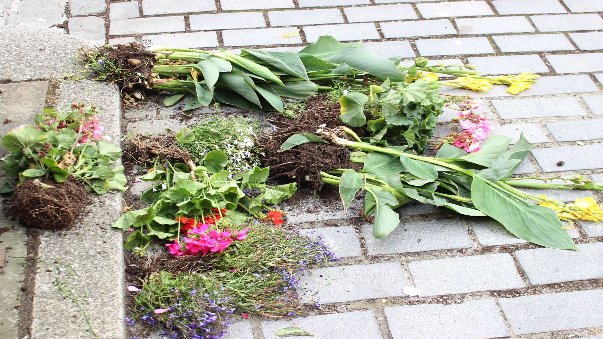 Flowers strewn across the road