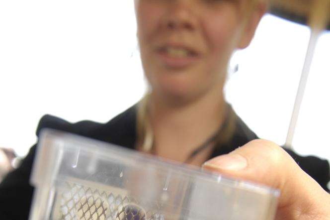 RSPB project officer Dr Nikki Gammans with a specimen of short-haired bumblebee.