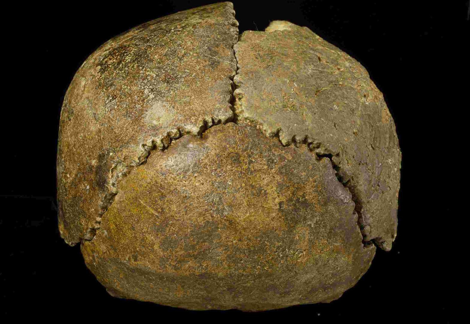 The Swanscombe Skull found at Barnfield Pit. Picture: The Natural History Museum