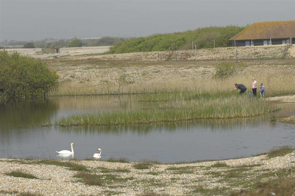 The Dungeness RSPB reserve - new home for the rare short-haired bumblebee.