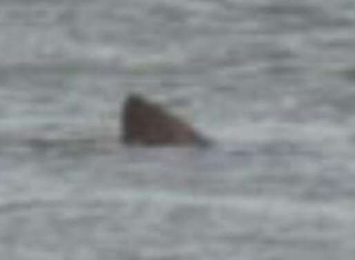 The shark spotted off Herne Bay, according to Abi Bell