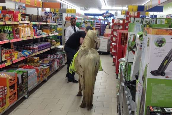A pony was spotted in the aisle