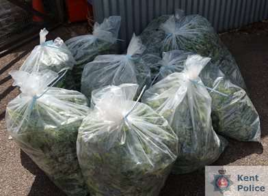 Cannabis seized from the scene