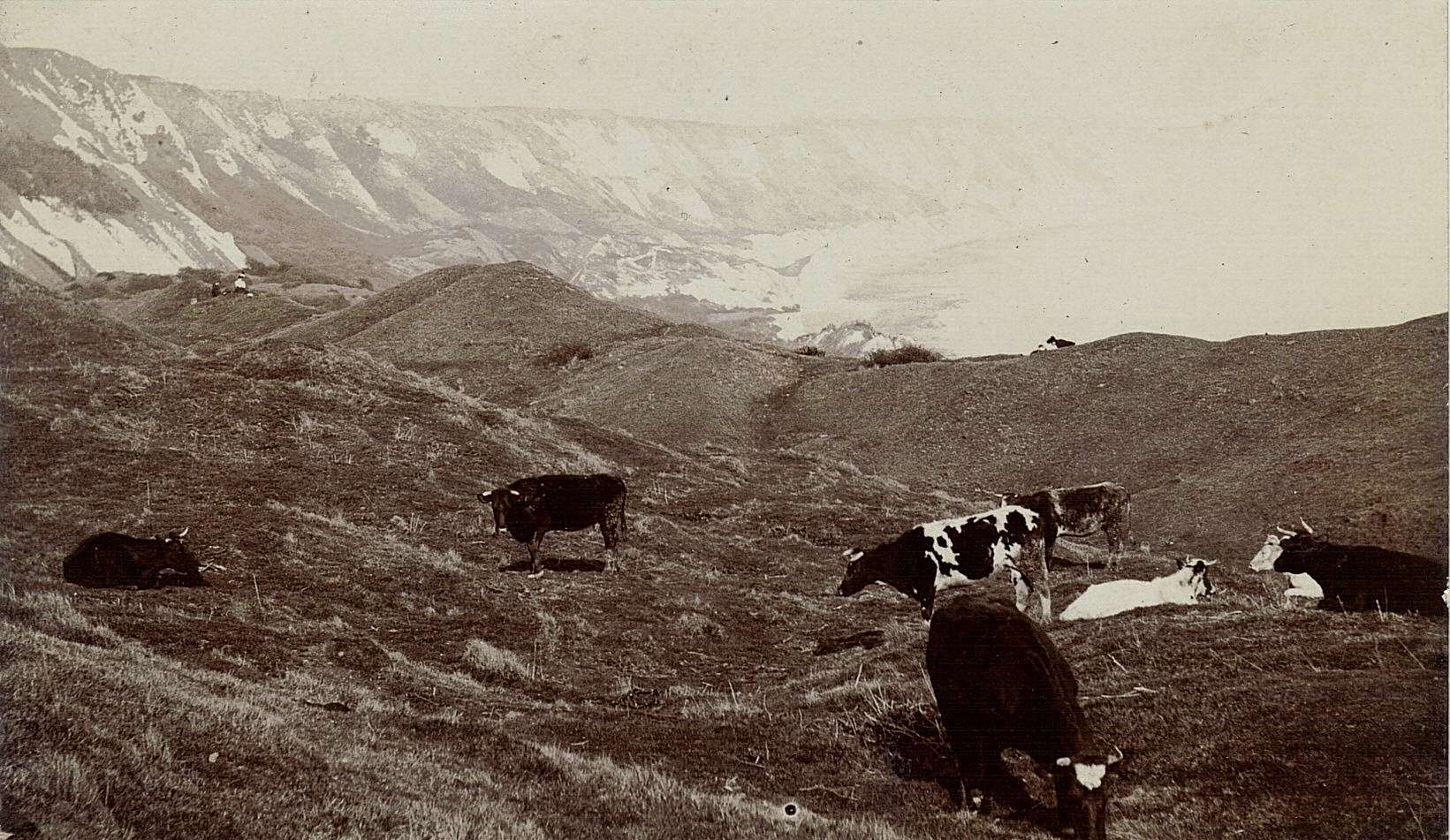 Cows on The Warren pre 1924 - picture courtesy of Alan Taylor