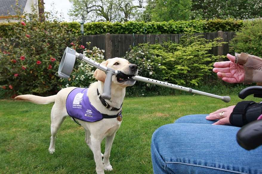 3rd – 9th August is International Assistance Dogs Week