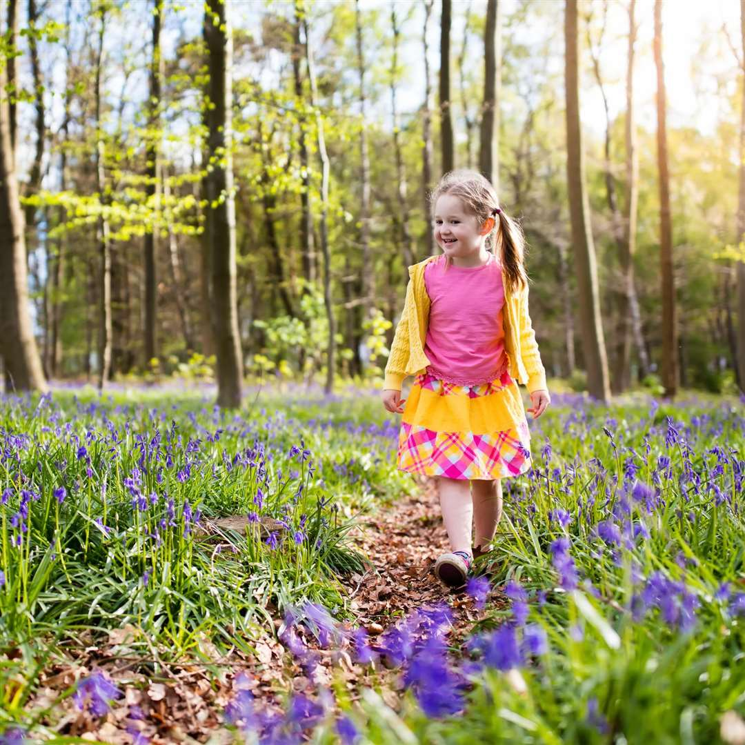 See bluebells across Kent this spring