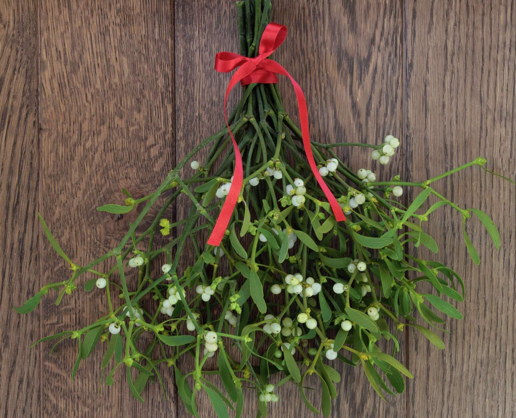 Christmas mistletoe