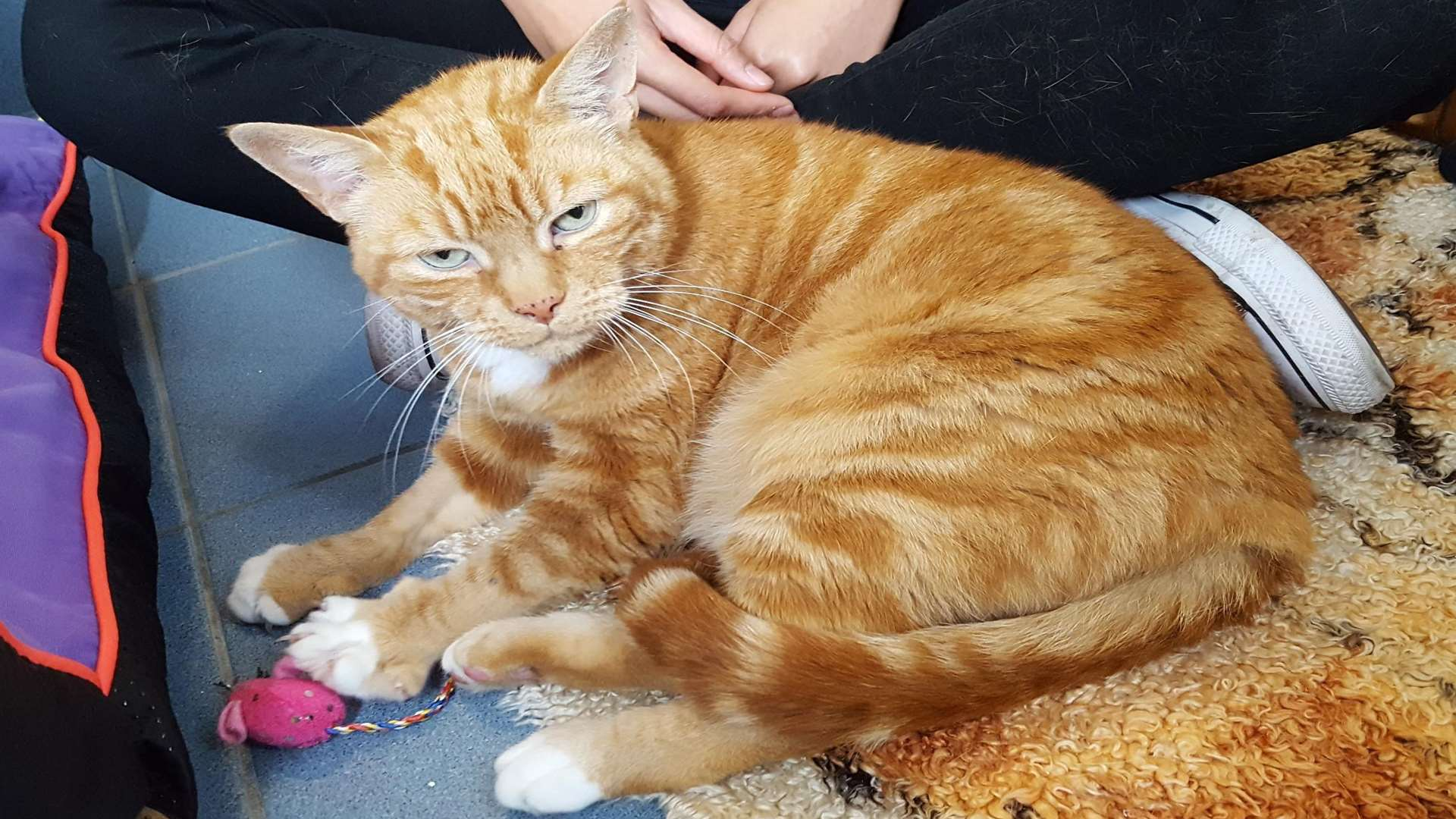 Eight-year-old Tommy is very affectionate and loves attention