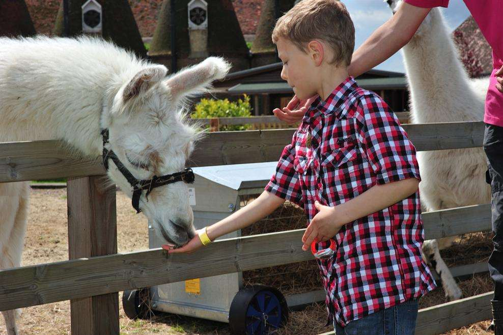 The Hop Farm Family Park began welcoming families for free last year