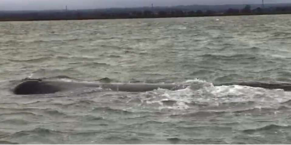 The sperm whale was spotted in water near Harty Ferry. Picture: BDMLR