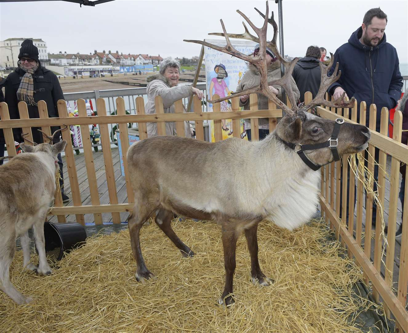 Reindeer at a previous event on Herne Bay pier