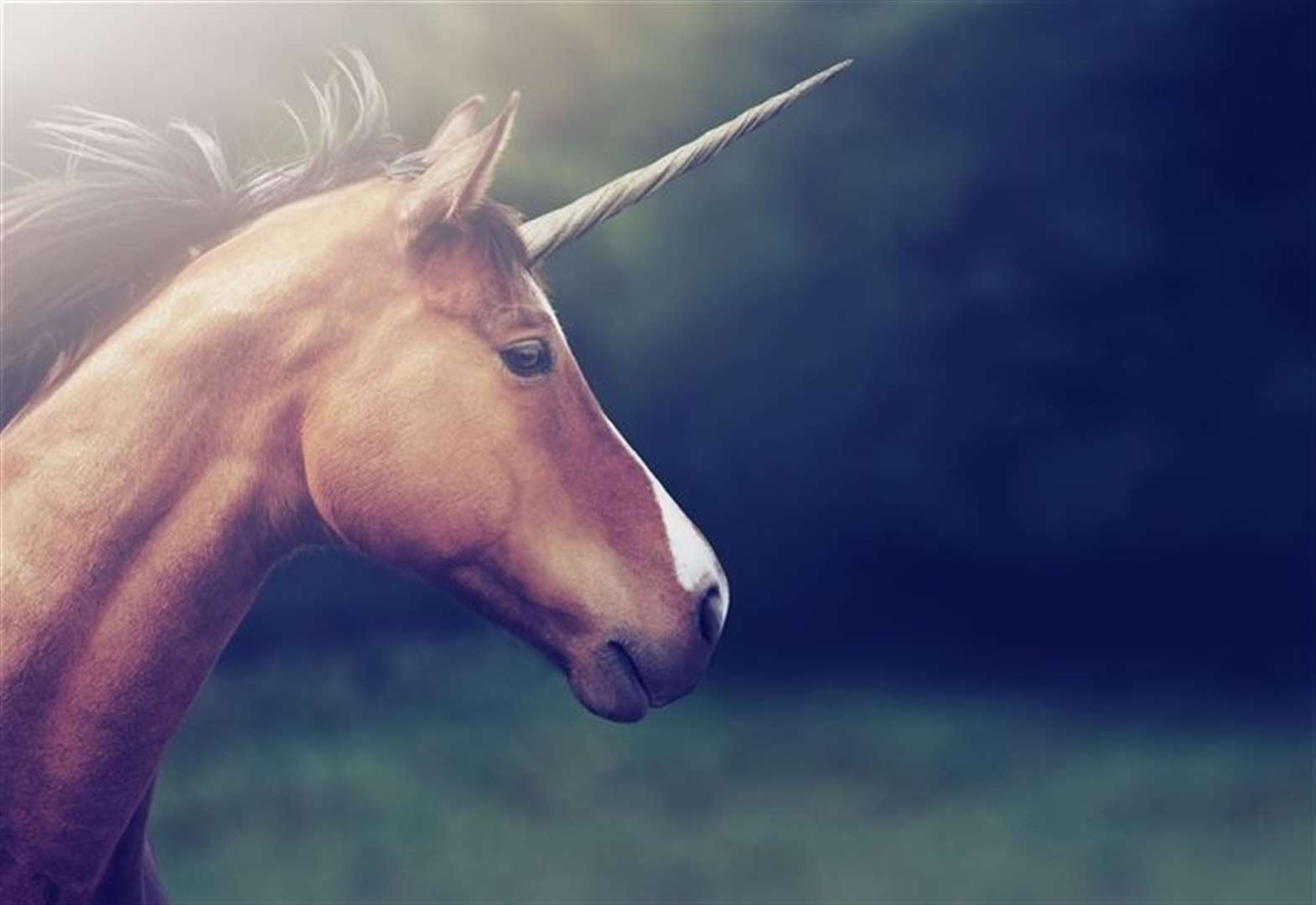 Firm offering chance to meet unicorns cancels all events