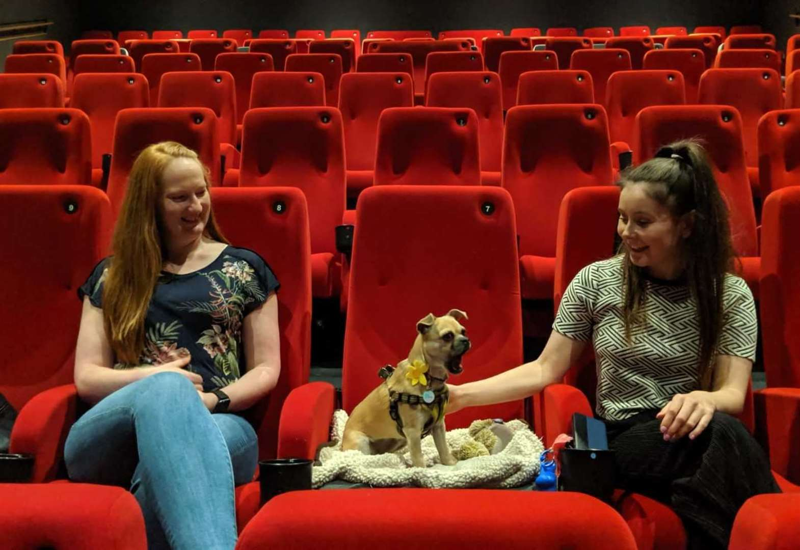 Fancy going to the cinema with your pooch?