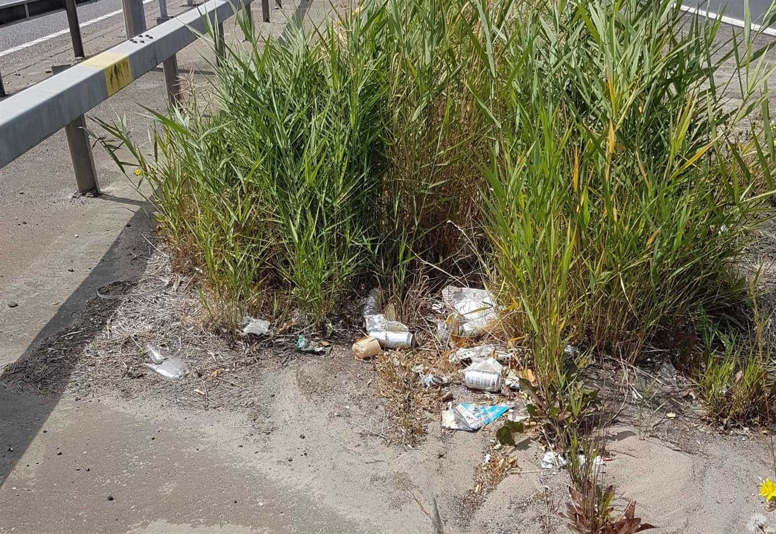 Litter dispute costs taxpayers thousands