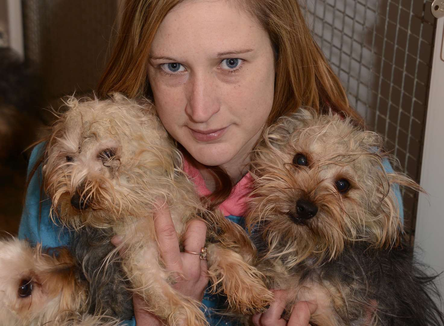 Woman risked jail for dogs she thought would die