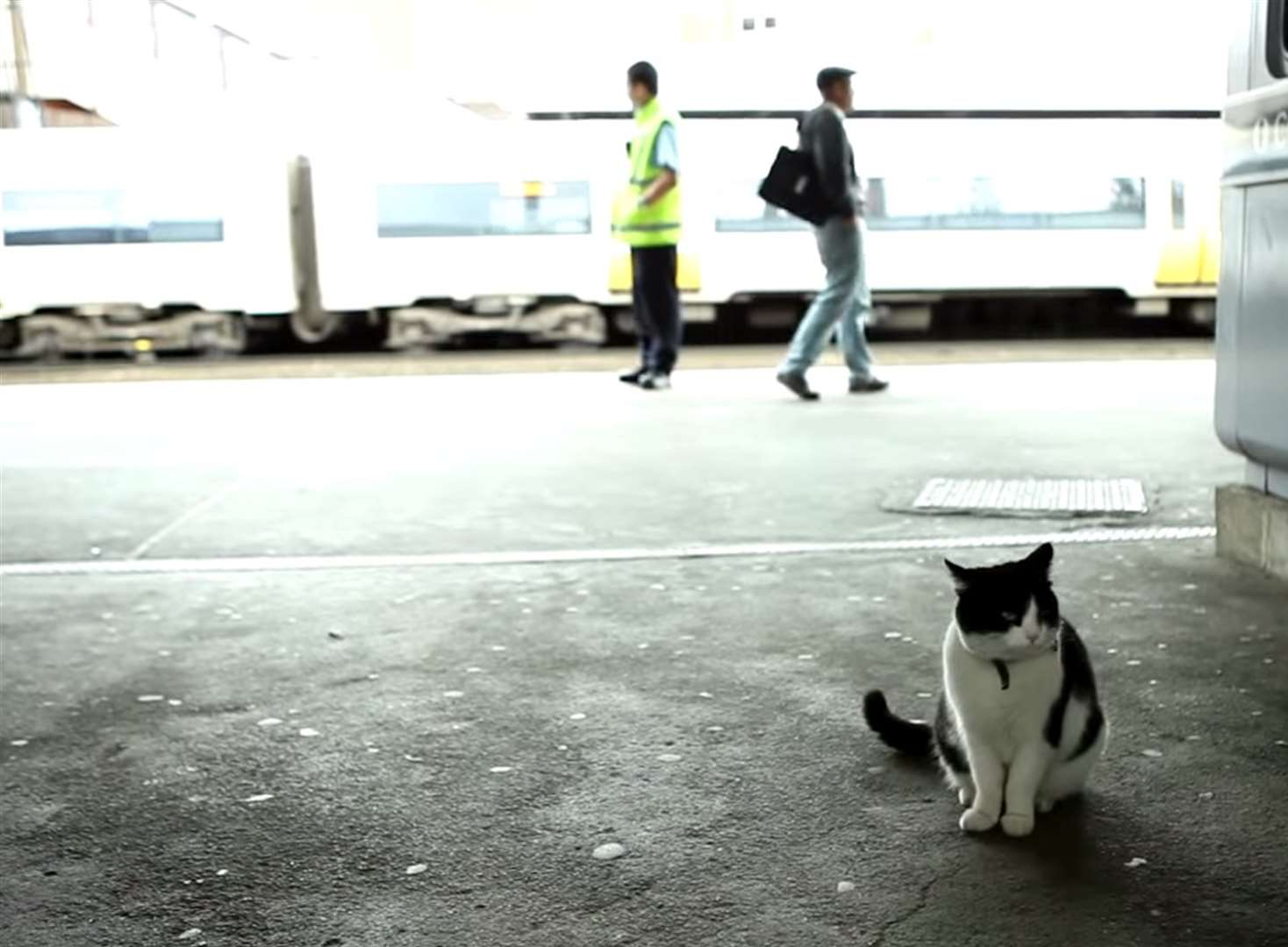 Station cat stars in railway video
