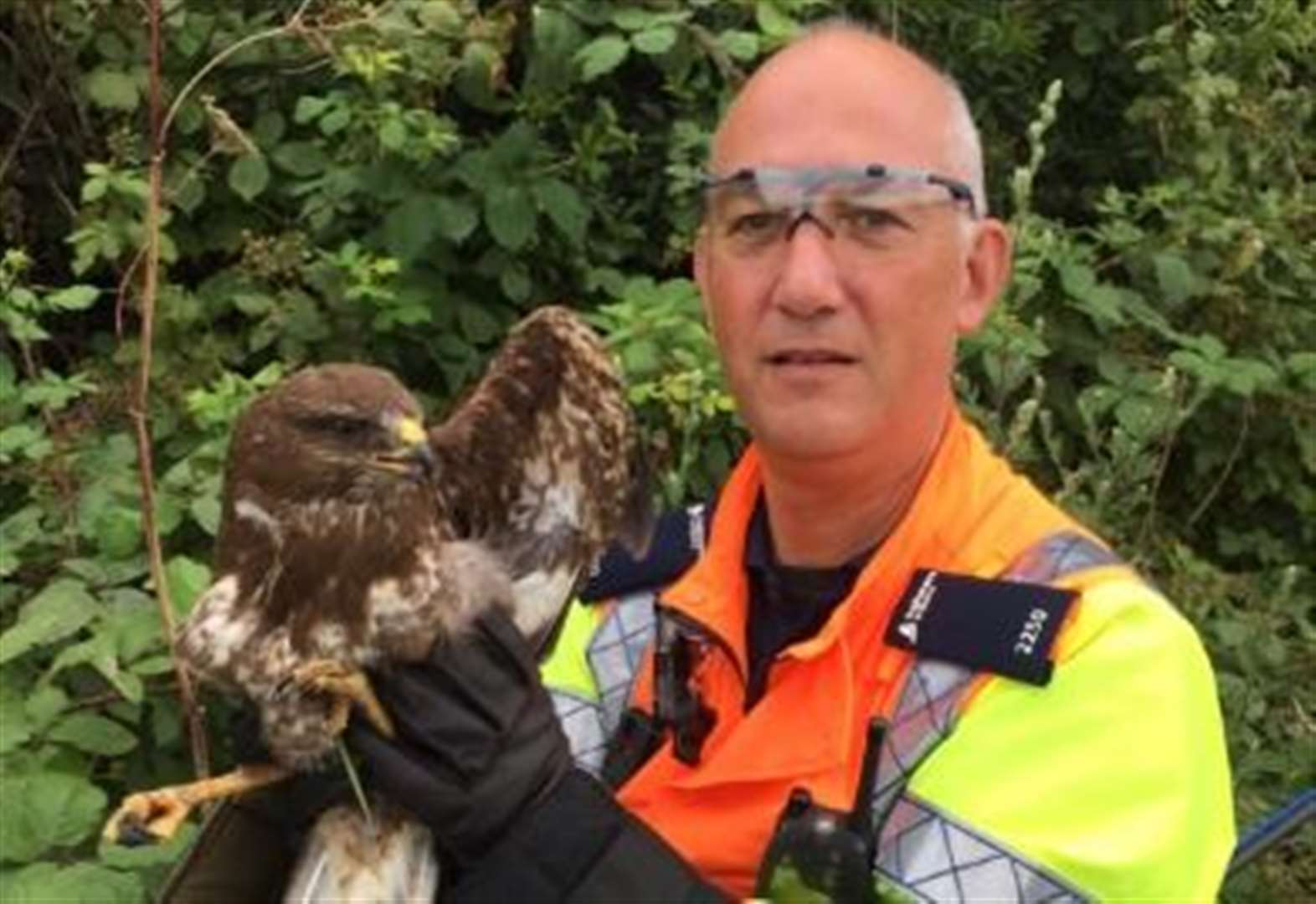 Bird of prey rescued from motorway