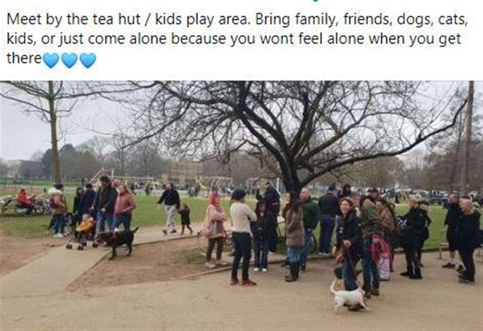 'Bring family, friends, dogs, cats, kids to park'
