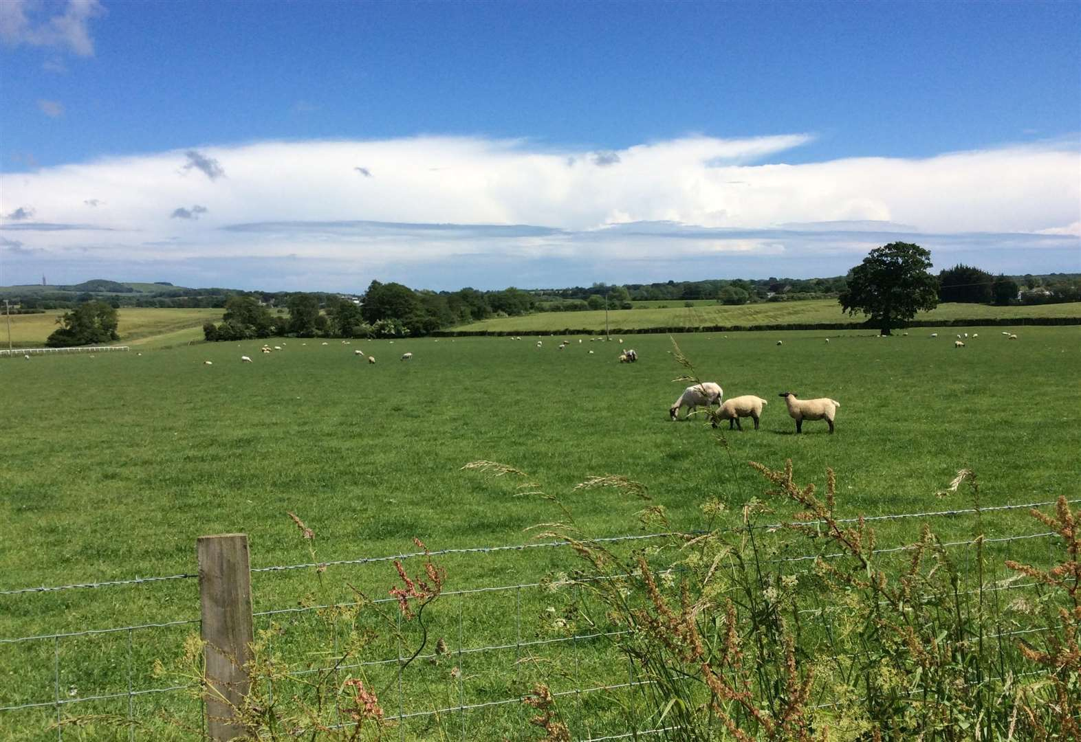 Council tells farmer 'get off your land'