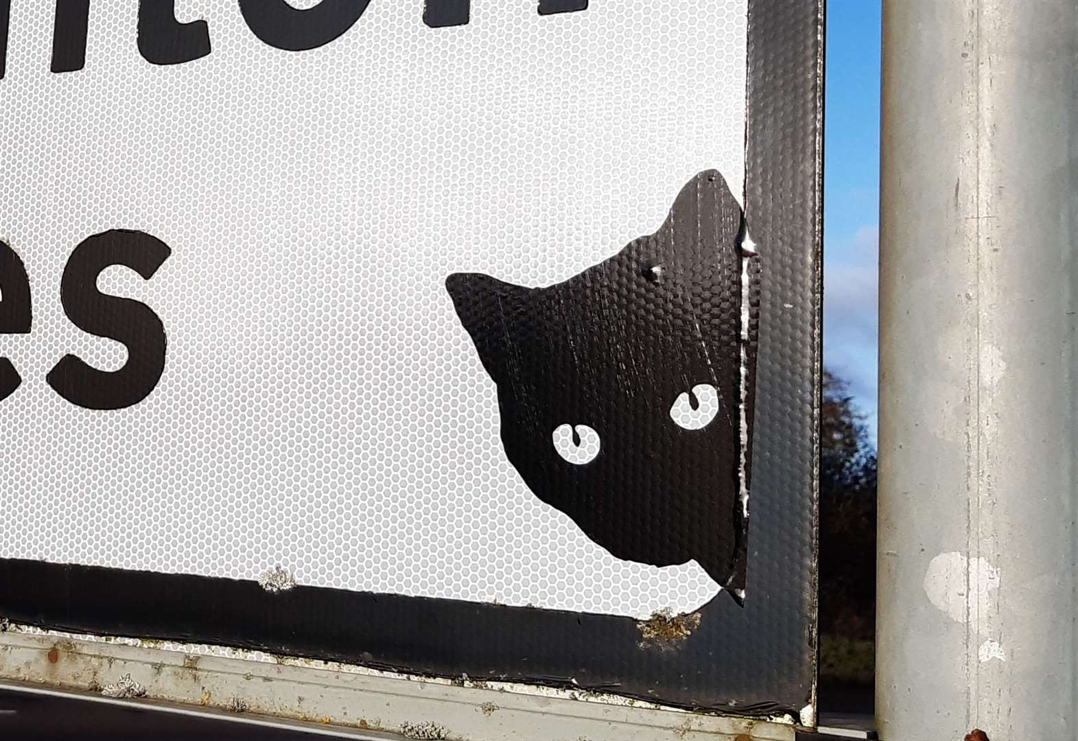The mystery of black cats on Kent road signs