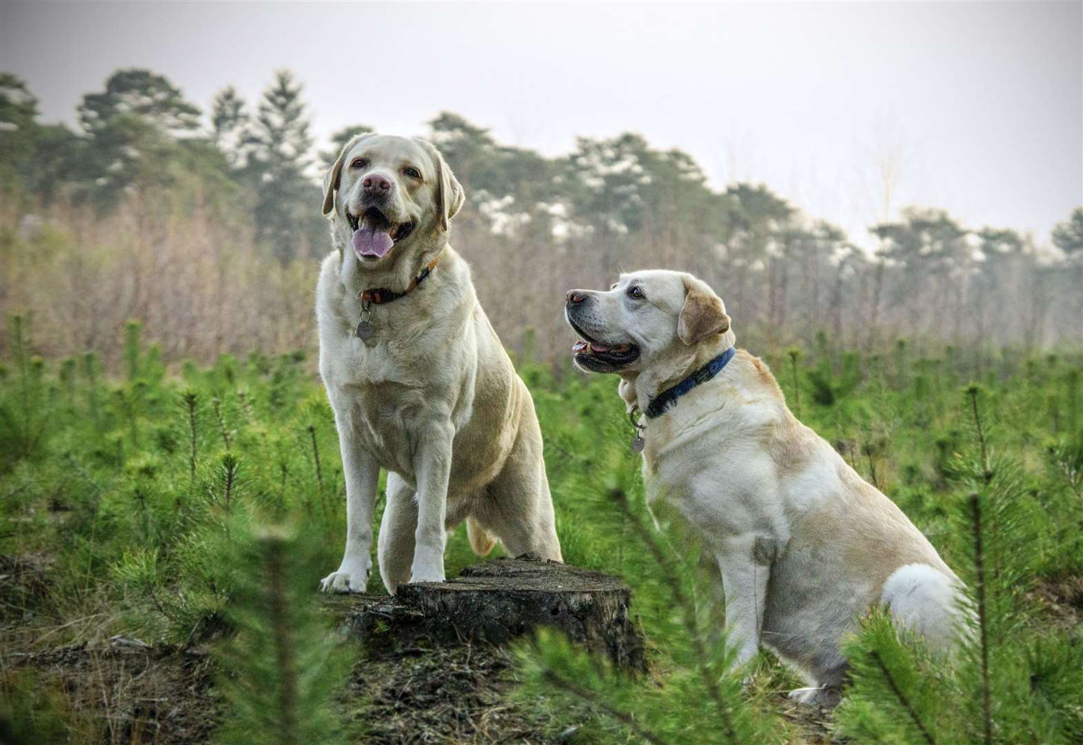 'Lift ban on areas to let dogs walk'