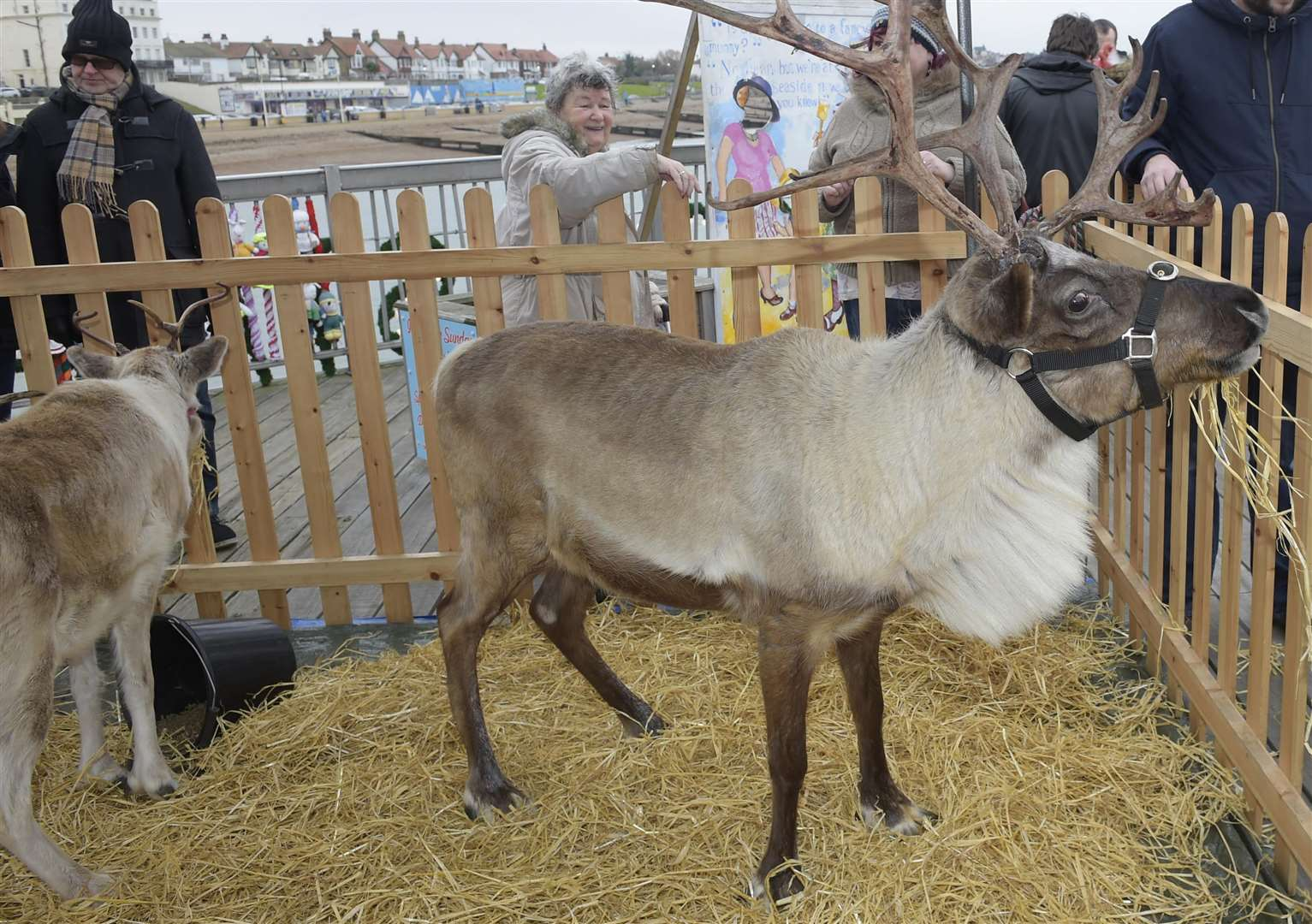 Reindeer event to go ahead despite charity's welfare fears