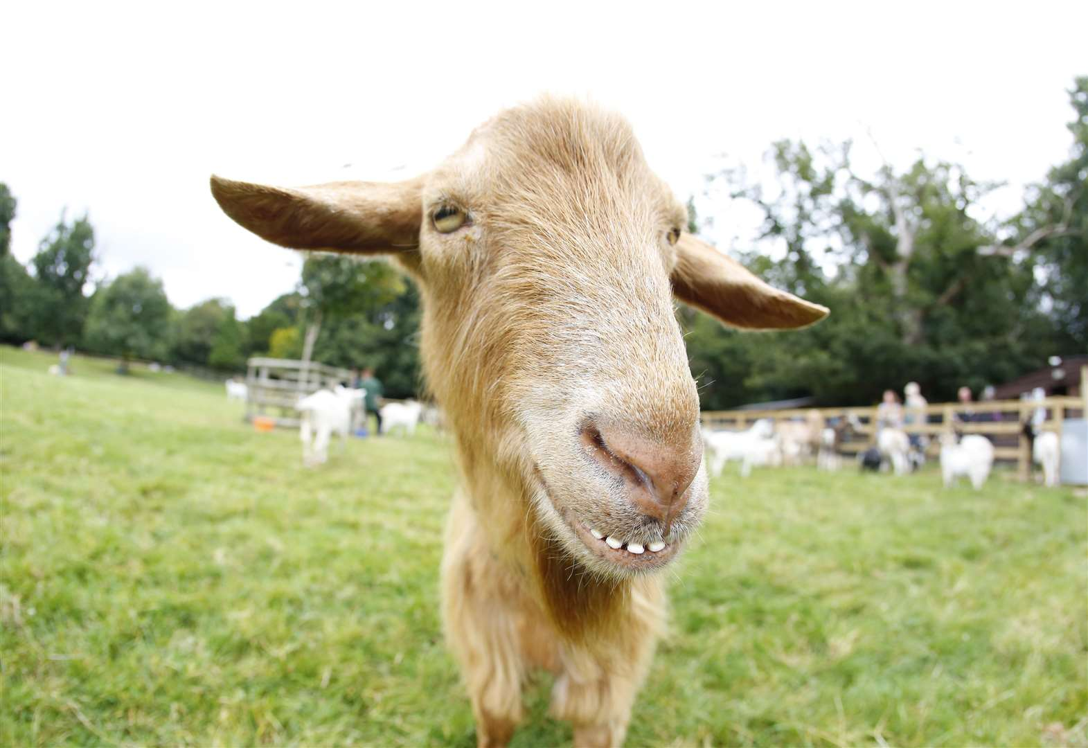 Boost for much-loved goat sanctuary