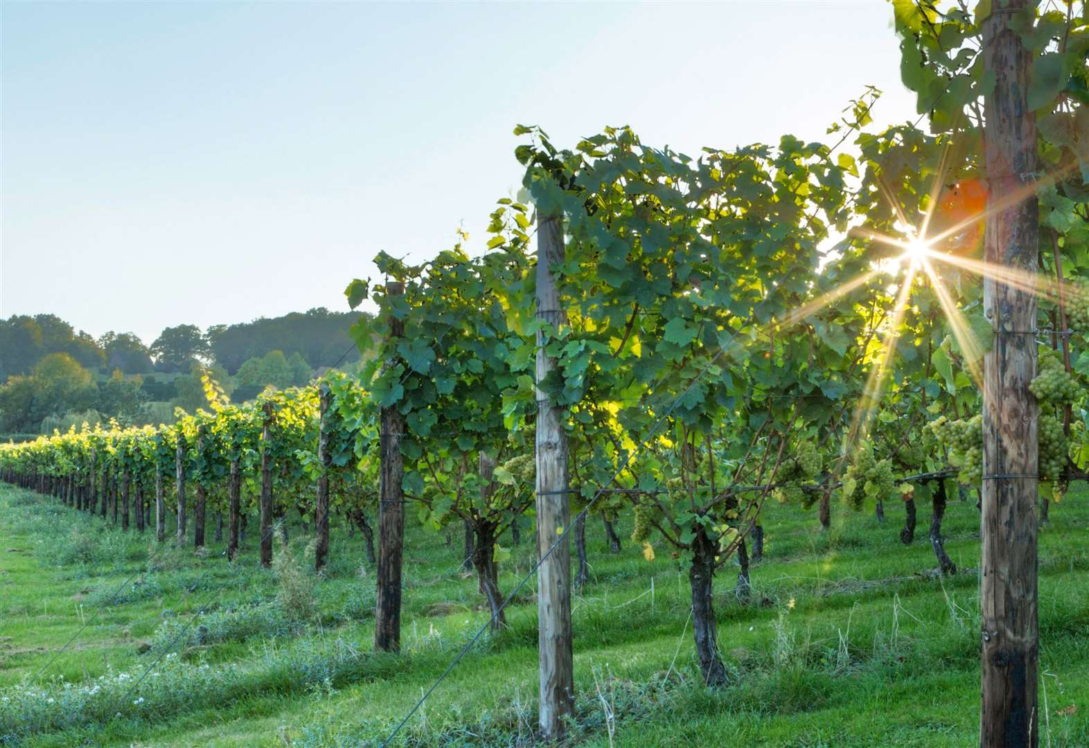 Cycle tours for Kent wine lovers