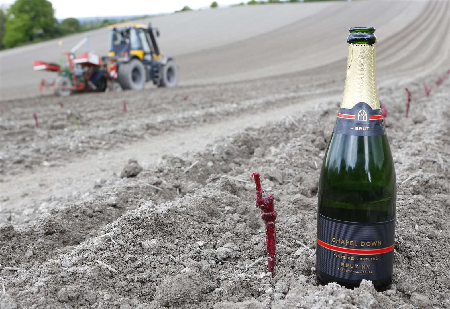 England's largest vineyard planted in Kent