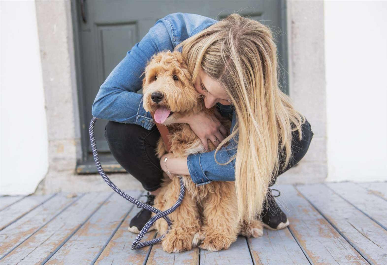 Does my dog like me? Here's how to read its body language to find out.