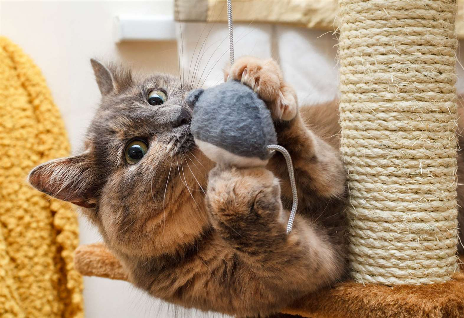 How to keep your feline friend perky and playful