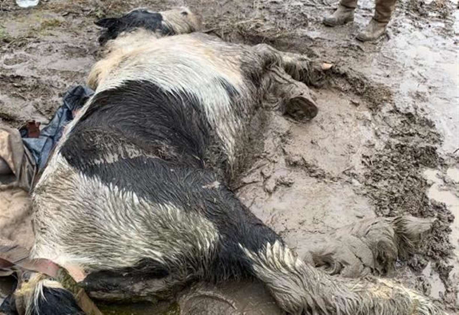 Horse dumped and 'left to die' during storm