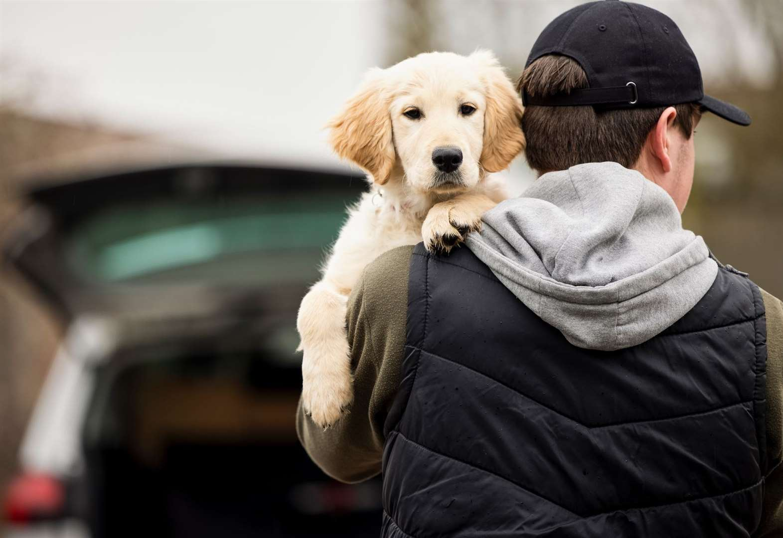 10 ways to help keep your pet safe from dognappers