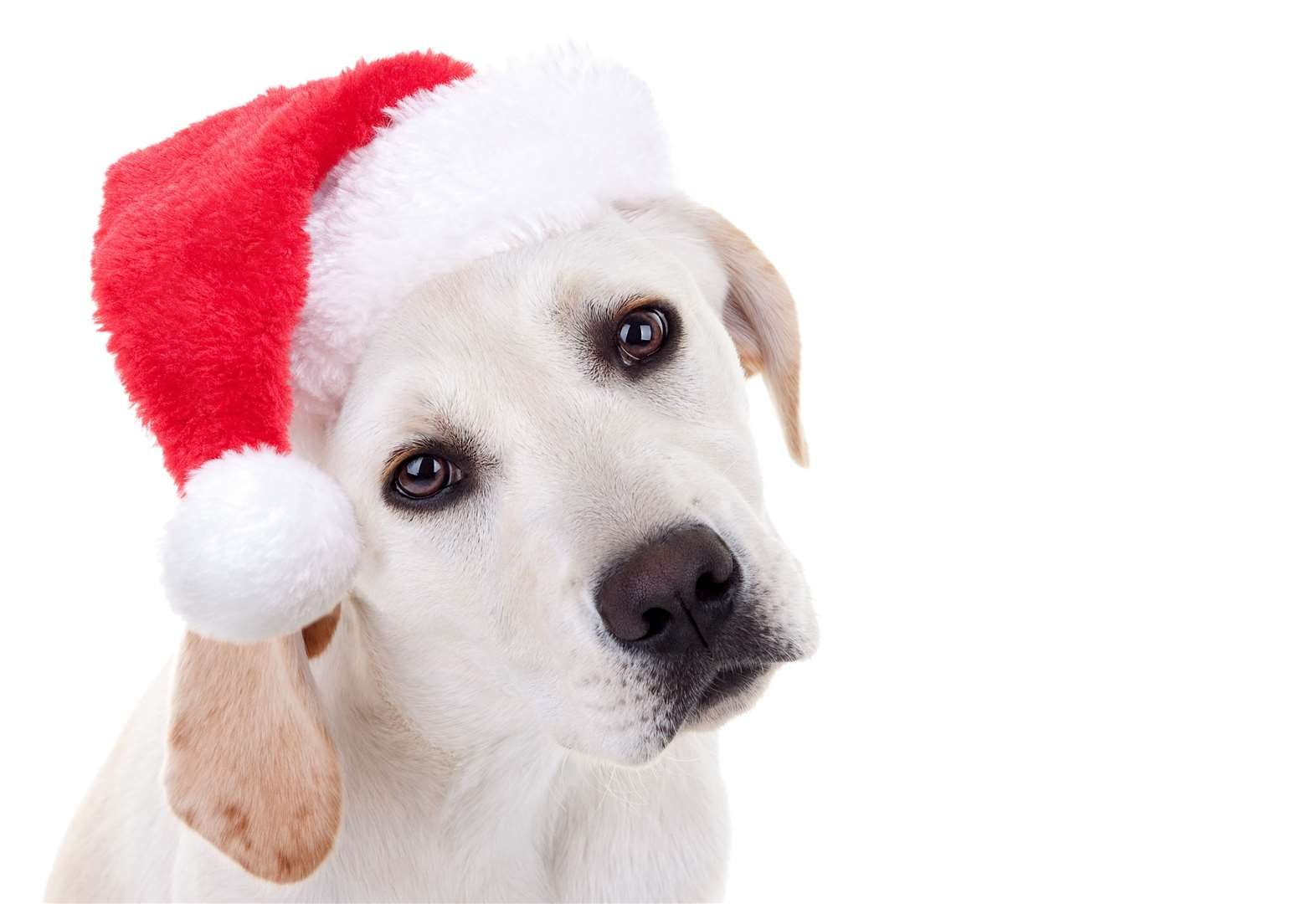 Santa Paws set to get tails wagging