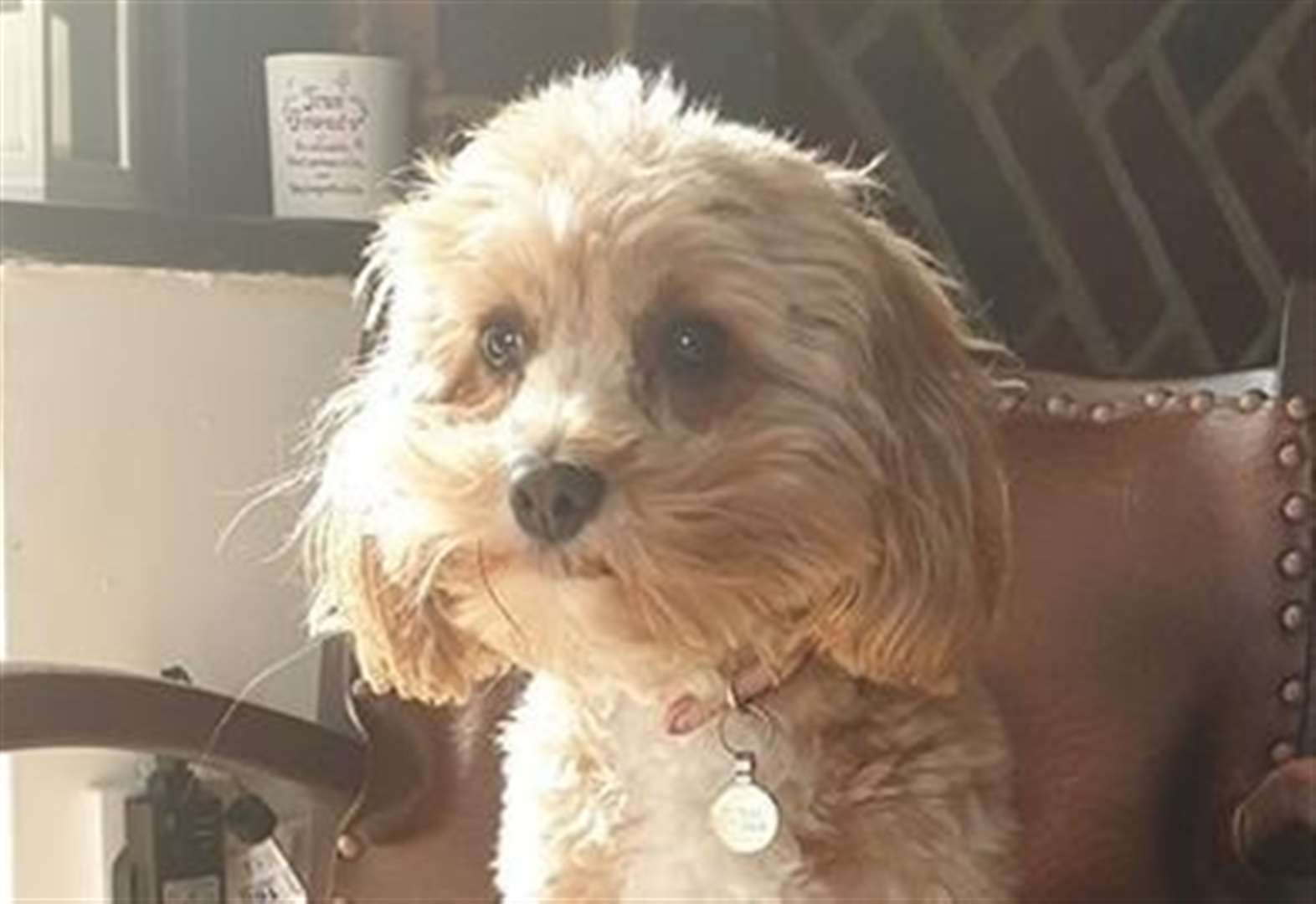 Mum's appeal to find autistic son's dog