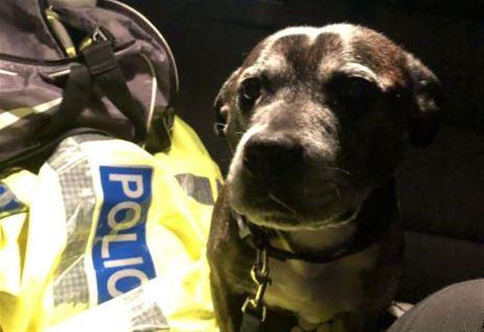 Dog found in dumped car