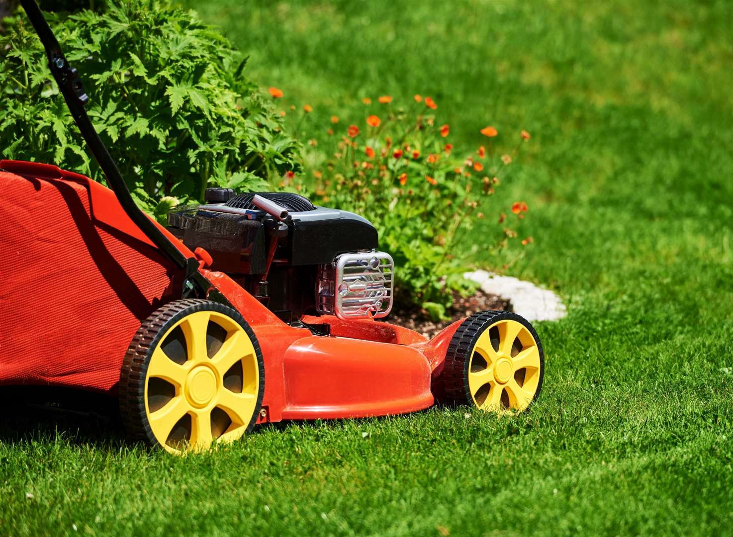 Water and mow carefully for a great summer lawn