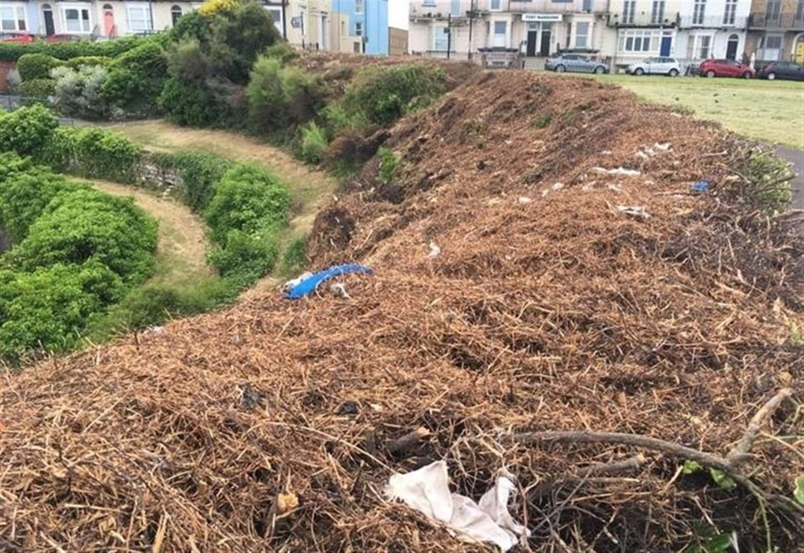 Review after hedge cutting caused 'carnage'