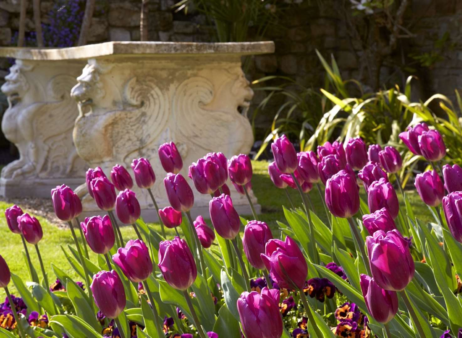 Early tulips are a seasonal surprise for experts