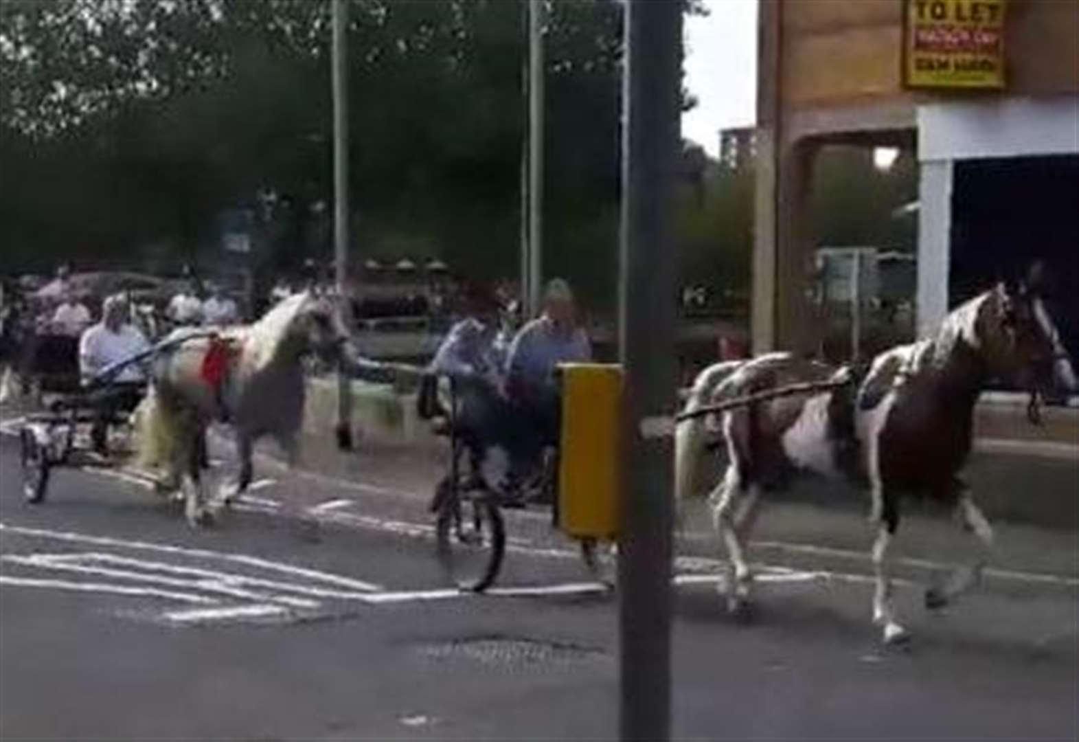 VIDEO: See the moment horses come clattering into busy High Street